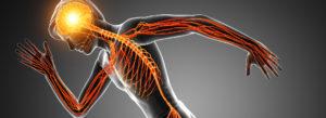Nervenbahnen illustriert für Reflexintegration